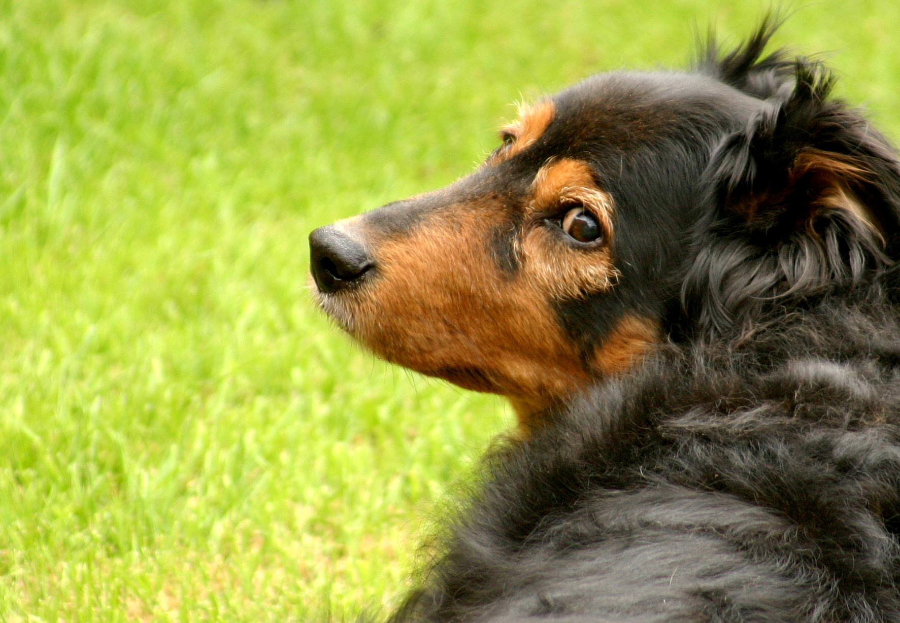 A Pet Food Ingredient to be Wary of: Menadione Sodium ...