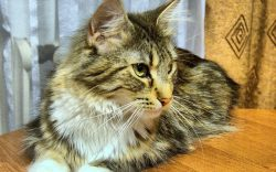 Animal Digest Truth About Pet Food