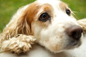 Some Manufactured Pet Food Issues & Solutions