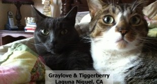 71GrayloveTiggerberry