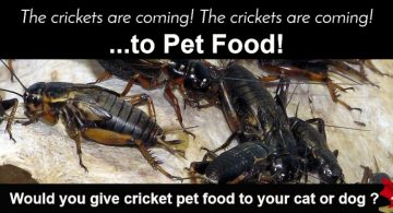cricketpetfoods