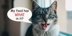 What Consumers Are Not Told About Pet Food Ingredients