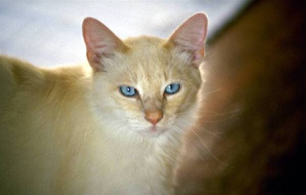 My Cat Is Fiv Positive What Can I Do To Help Her Live A Long Life Truth About Pet Food