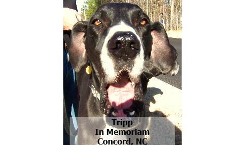 108Tripp