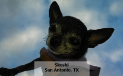 Skoshi Dog Name