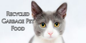 Which Pet Food Ingredients are Recycled Garbage?